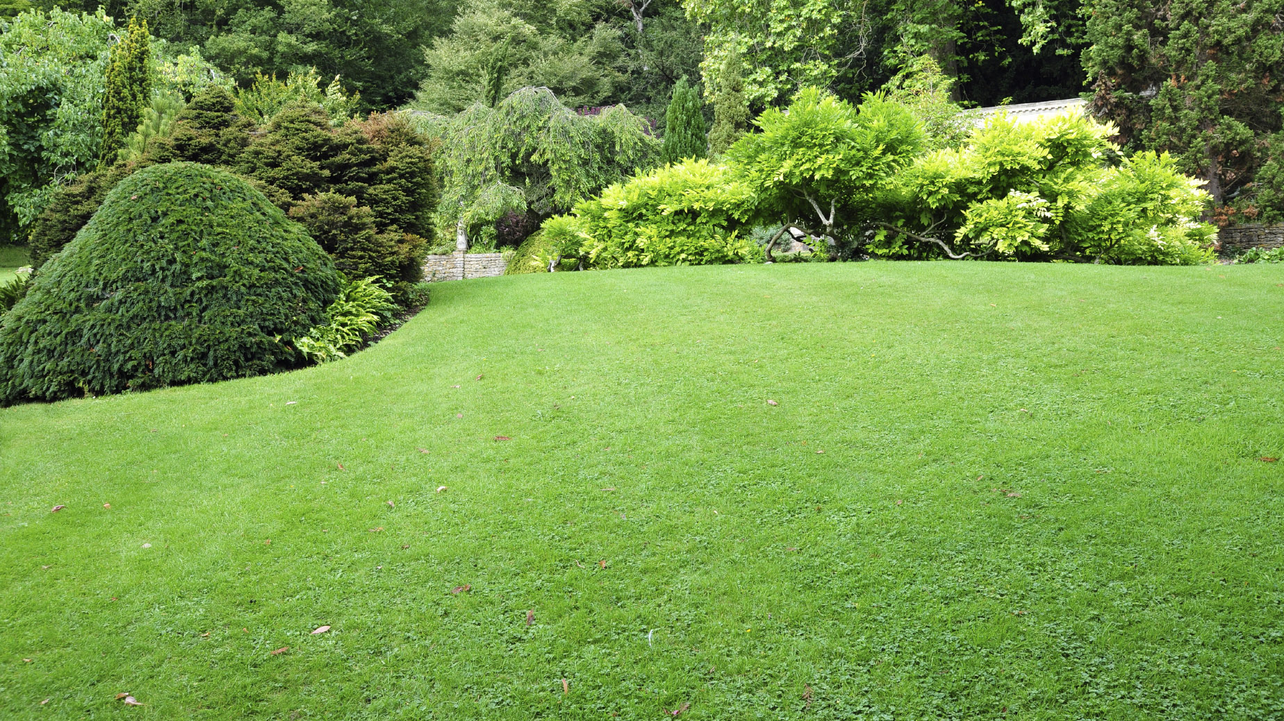 Progressive charlestown improve your lawn and save money Yard and garden